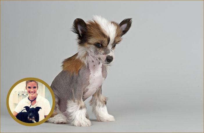 Wichtigster Schutzmantel: Die Haut des Hundes