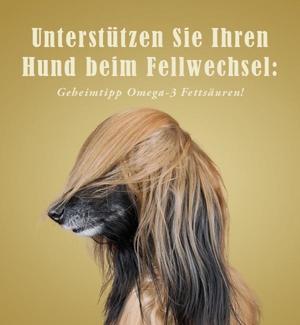 So unterstützen Sie Ihren Hund beim Fellwechsel.