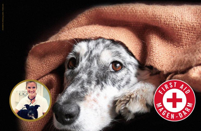 Erste Hilfe für den Hundemagen - Magen-Darm-Probleme beim Vierbeiner
