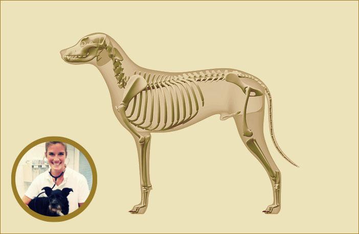Der Bewegungsapparat des Hundes: Aufbau, Wachstum und Erkrankungen