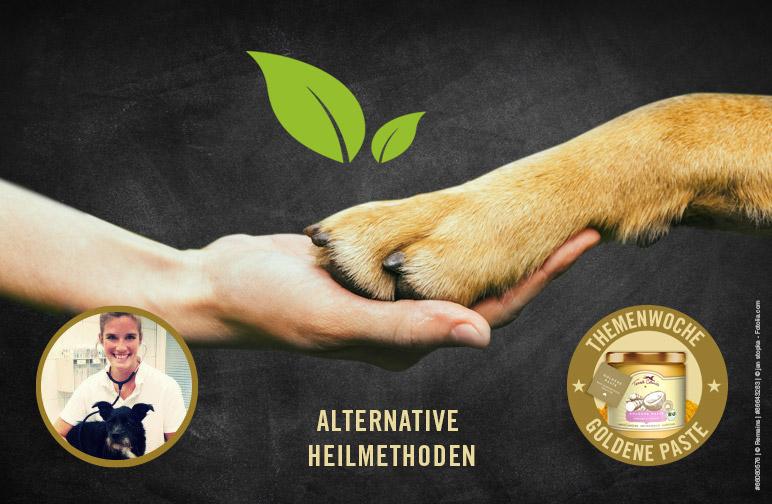 Alternative Heilmethoden – Sanfte Hilfe für den Vierbeiner