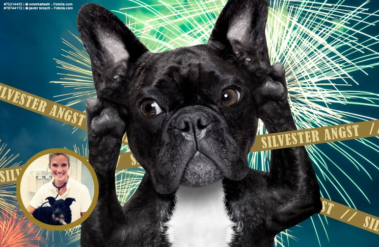 Tierische Silvester-Tipps für den Hund