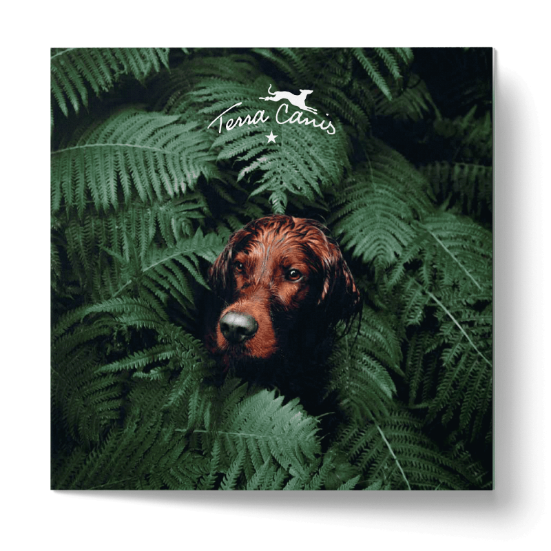 Broschüre - Terra Canis Goes Green 21x21